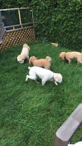 Doggy daycare and In-home Boarding