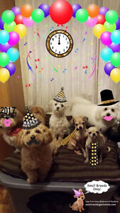 HAPPY HOME DOG DAYCARE,BOARDING FOR LITTLE DOGS SINCE 2010