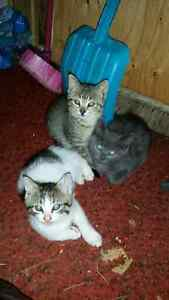 Kittens for sale $20 each