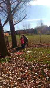 $5 a bag leaf and lawn clean up London Ontario image 1