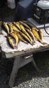 Gordies Live Bait Cabin And Boat Rentals