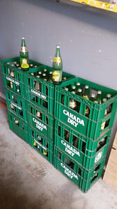 Nine Canada Dry Plastic Cases Full of Vintage Pop Bottles