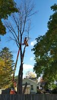 Tree Trimming and Tree Removal