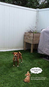 Daycare & resort for small dogs in a certified trainers home West Island Greater Montréal image 3