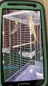 Cage & bird for sale