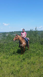 Well Broke quarter horse mare 16yr old and 14.2hh