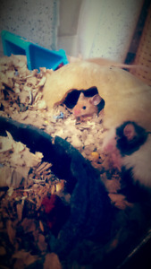 Pet mice ready for homes