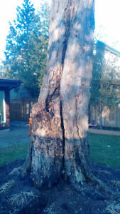 Wood chipping,stump grinding,tree removal,free same day estimate