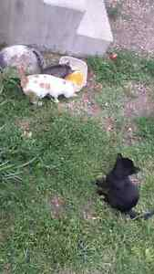 Awesome kittens FREE