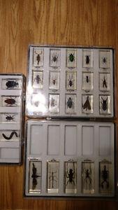 Collection d'insecte valeur 15$ chaque je laisse le tout pour 50