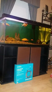 55 Gallon Tank W/ Stand and fish