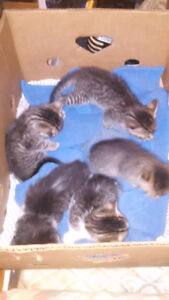 Kittens need good homes-almost ready to go!