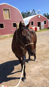 ISO: Stall / horse boarding / board close to Cole Harbour