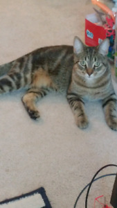 Free 8 month old male cat