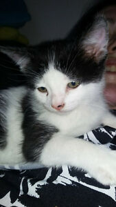 baby male kitten needing a forever home