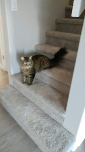 Lost cat in The Towns