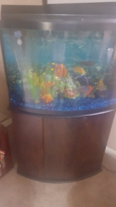 Beautiful Fish tank  complete set / fish