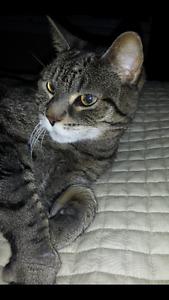 Lost cat Newcastle