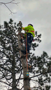 TREE SERVICES.  Removal, trimming, hedges, Stump removal and mor Kitchener / Waterloo Kitchener Area image 6