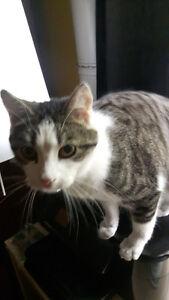 Handsome, Playful Cat needs loving home