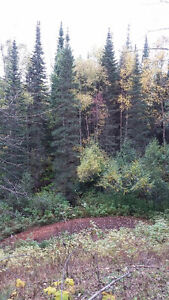 Buy the timber, get 80 acres free! Prince George British Columbia image 4
