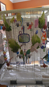 7 Assorted Colored Budgies with Huge Cage & Accessories