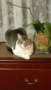 Lost male tubby cat Lucky