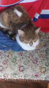Chatte a donner 2 ans tres propre