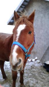Lf horse trailering