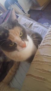 Petite chatte