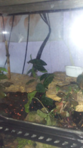 Fire belly toads (2)