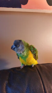 Little you you parrot