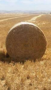 5x4 Round Bales Barley Straw Palmer Mid Murray Preview
