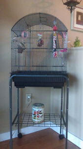 Two finches with cage and stand and accessories