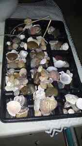 Decorative stones, coral, shells etc