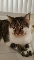 cat sitting service montreal griffintown gardienne d'animaux