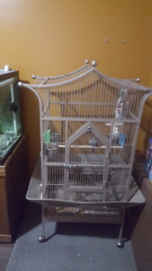 Proven pair of cackatiel for rehoming