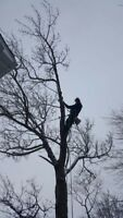 Certified Tree Climber