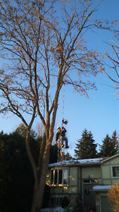 PROFESSIONAL TREE SERVICES/ALL SEASON TREE SPECIALISTS Kitchener / Waterloo Kitchener Area image 1