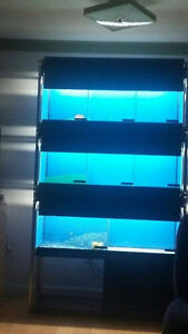 pets unlimited tanks and racks