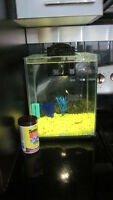 Fluval Chi 5 Galon - with fish and LOTS of accessories