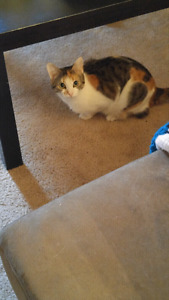 Two cat sisters need rehoming