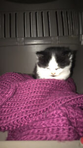 BABY CAT, 1 month old!!. Price comes with utilities