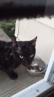 Found: Black male cat in Pacific Heights
