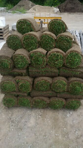 Rainy weather is coming, the best time to lay sod! Free watering