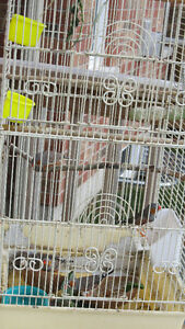 Zebra Finches with Tall Cage Peterborough Peterborough Area image 3