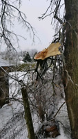 Tree Ice Storm Clean-up
