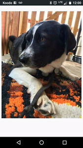 Rescue hound seeks special home with women