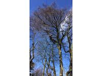 steels tree services