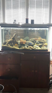 40 gallon long with light canopy and stand